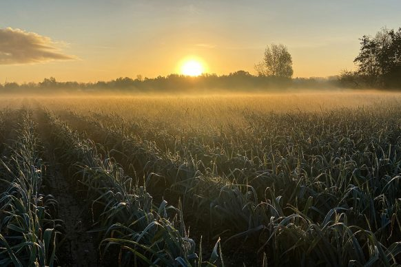 GROW. Photo credits Daan Roosegaarde