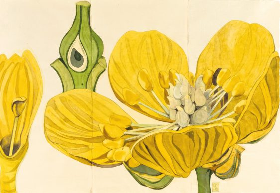 Sarah Graham, Nuphar and Ranunculus, 2016. Ink on paper, 1.2 × 1.8 m / 3 ft 11 in × 5 ft 11 in, Private collection. Picture credit: Lyndsey Ingram (page 65)