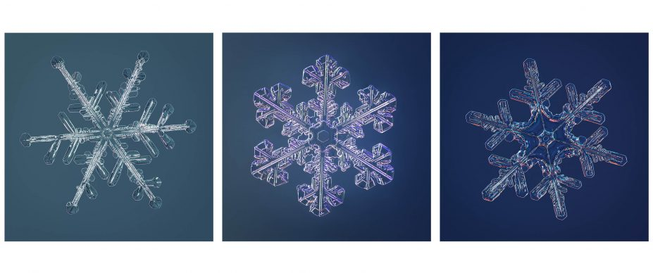 Snowflake Triptych. Location(s) from left to right: Timmins, Canada, Fairbanks, AL, US, Timmins Canada. Photo credit Nathan Myhrvold / Modernist Cuisine Gallery, LLC