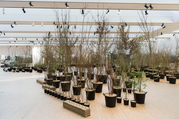 Installazione Foresta M9. Photo Alessandro Scarpa