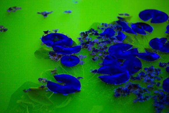 Olafur Eliasson, Life 2021. Installation view: Fondation Beyeler, Riehen/Basel, 2021 Courtesy of the artist; neugerriemschneider, Berlin; Tanya Bonakdar Gallery, New York / Los Angeles © 2021 Olafur Eliasson Photo: Pati Grabowicz
