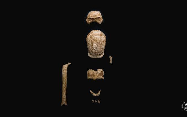 Neanderthal ©️ Ufficio Stampa e Comunicazione MiC. Photo Emanuele Antonio Minerva