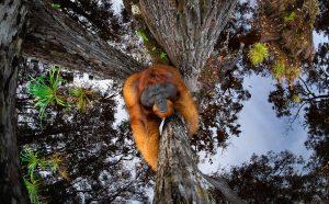Thomas Vijayan, The World is Going Upside Down © Thomas Vijayan / Nature TTL